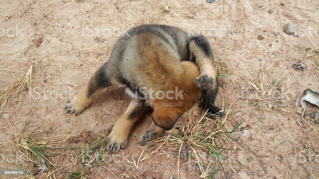 cachorrinho fofo, cheirando-se ao ar livre - foto de acervo