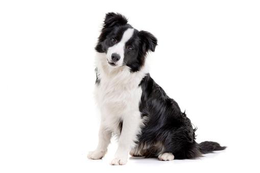 Cute Puppy dog Stock Photo