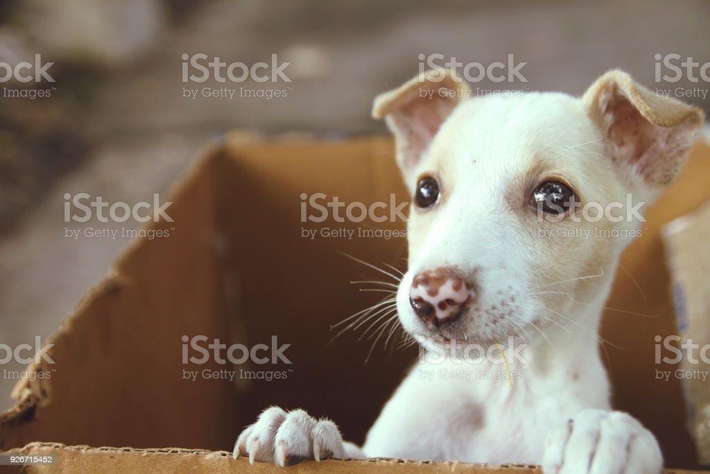 Cute Puppy in a box stock photo