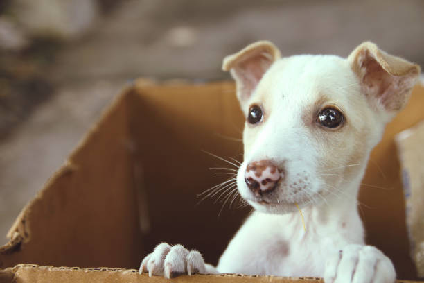 Cute Puppy in a box Cute Little Puppy in a box mixed breed dog stock pictures, royalty-free photos & images