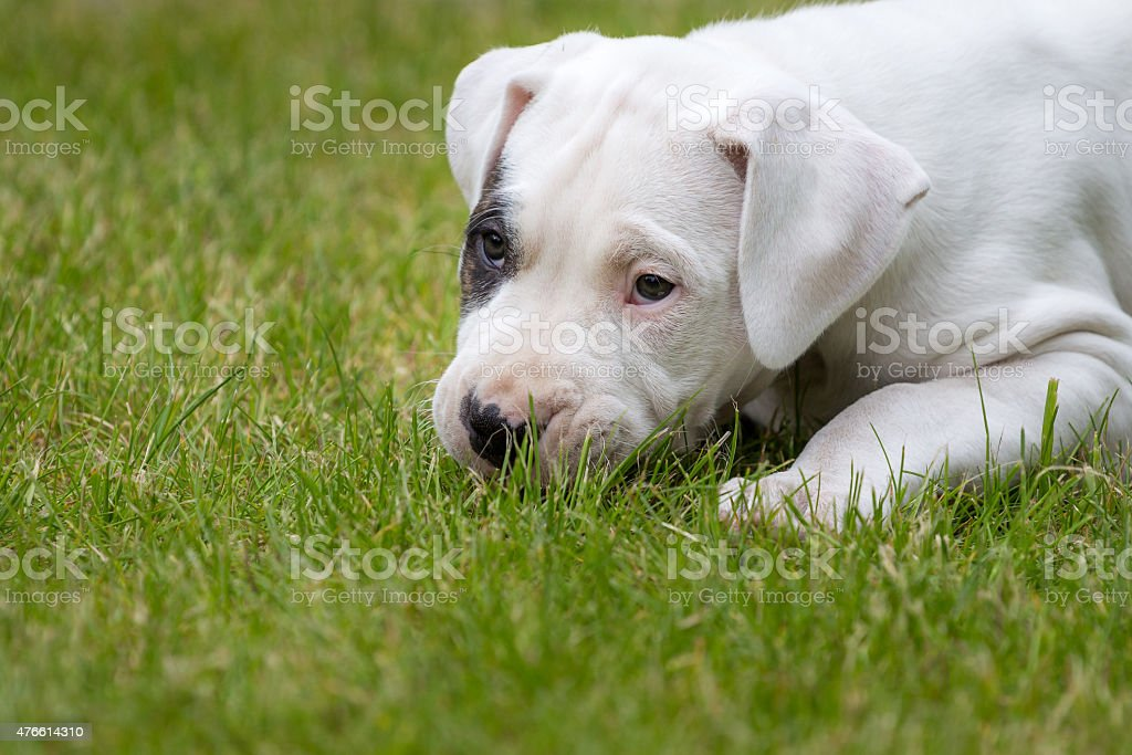 Cute puppy in the grass stock photo