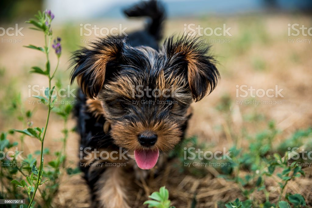 Cute puppy in the grass royalty-free stock photo