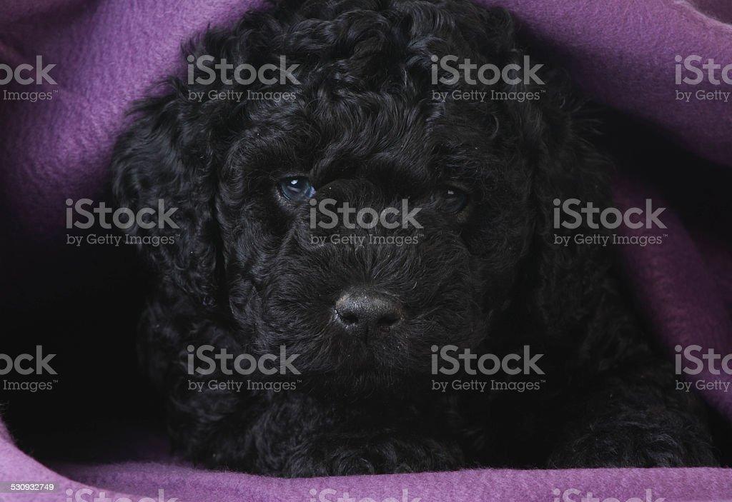 cute puppy stock photo
