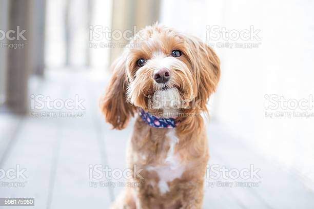 Cute puppy picture id598175960?b=1&k=6&m=598175960&s=612x612&h=mus2r0v7momwq1wqffxozae5jtofakzmq5aussls2wo=