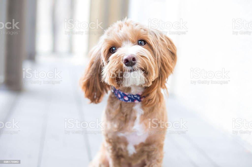 Linda cachorro  - foto de stock