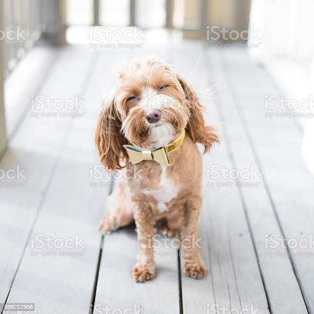 Cute puppy picture id598222958?b=1&k=6&m=598222958&s=612x612&h=r8fumzz5uwggj4kmuniajiap zugvh2swfxk lmoi u=