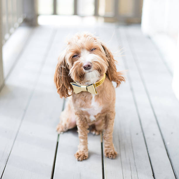 cute puppy - happy pets stock photos and pictures