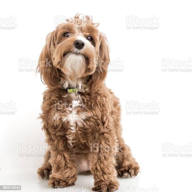 Cute puppy picture id995019342?b=1&k=6&m=995019342&s=612x612&h=ql5pncqriwaezysdbjjhzmwq nyoxm4iqrhcqlz0ize=