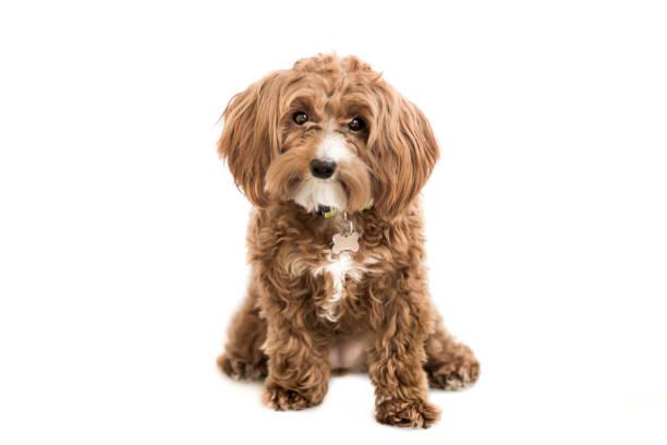 Cute puppy picture id996443152?b=1&k=6&m=996443152&s=612x612&w=0&h=unypwxaa8kv pug2grvzck5bpflevjl45iekr7ybqzi=