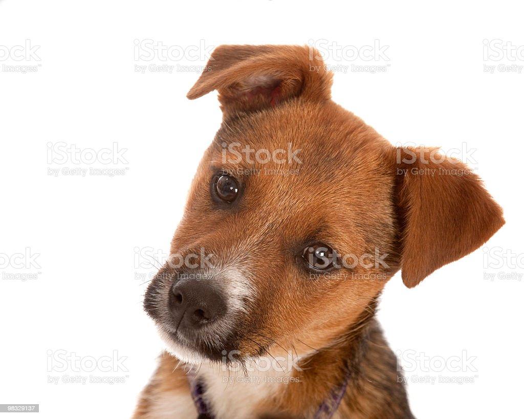 Cute Puppy Portrait stock photo