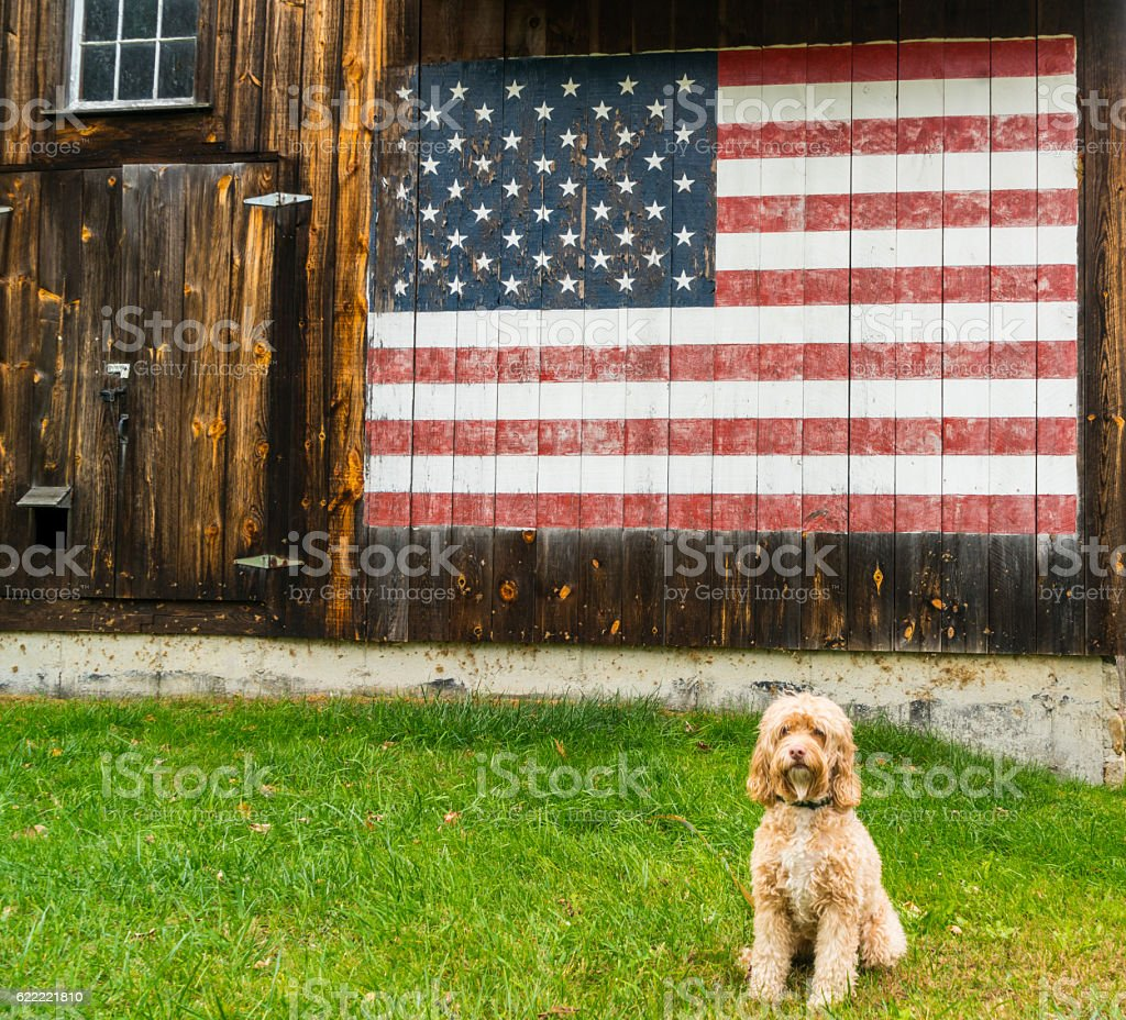 Cute Puppy Poses in Front of American Flag stock photo