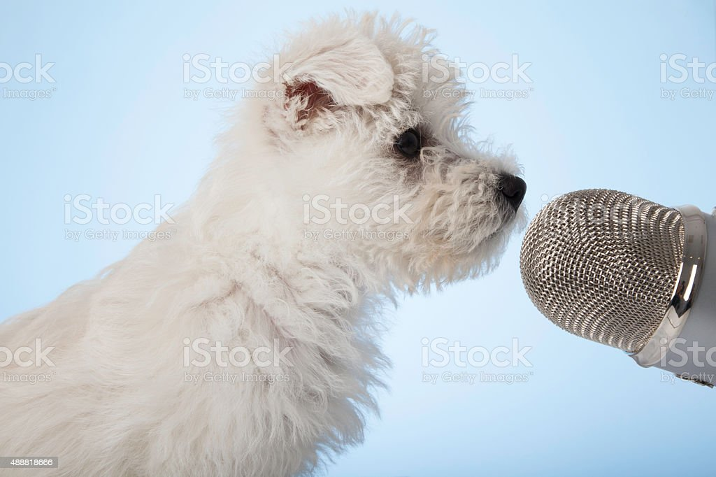 https://media.istockphoto.com/photos/cute-puppy-singing-into-microphone-picture-id488818666?k=6&m=488818666&s=612x612&w=0&h=NccpV-Mdla7hvIja0LucMUb_vw42qFvSJP6EAALSY_U=