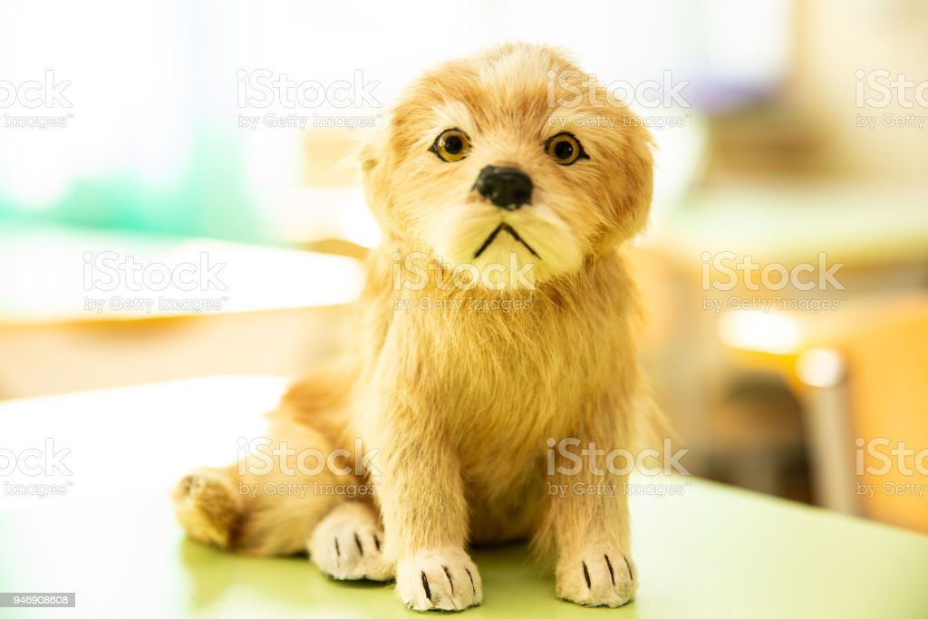 Cute puppy toy sitting sunlit stock photo