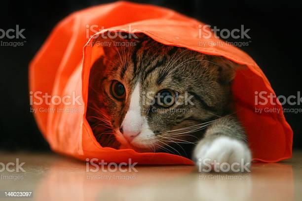 Cute pussy cat picture id146023097?b=1&k=6&m=146023097&s=612x612&h=hdbs4kjf45kox5hiwodlltwreejq20tgti5 gexaaao=