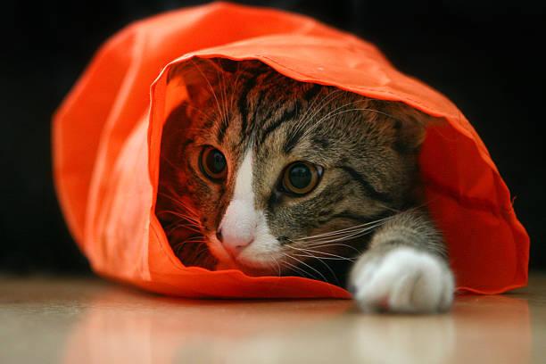 Cute pussy cat picture id146023097?b=1&k=6&m=146023097&s=612x612&w=0&h=yw2vf4pmnpzn6k9ti 3ssiwivpkq9186xi9 znkemog=