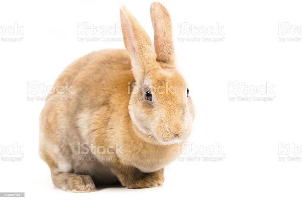 Cute rabbit stock photo