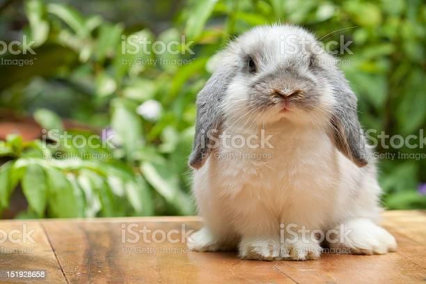 Cute rabbit sitting on marble surface picture id151928658?b=1&k=6&m=151928658&s=612x612&h=bbmn0idvm6qr0cwdldnwonba1to8bxivpsaez8ljmtw=
