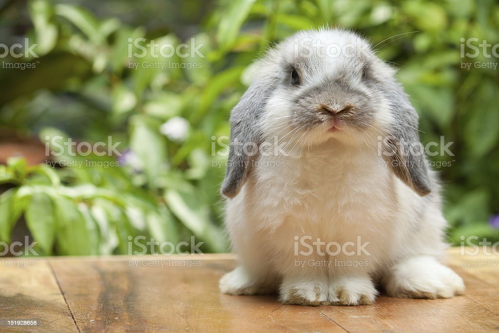 Cute rabbit sitting on marble surface stock photo