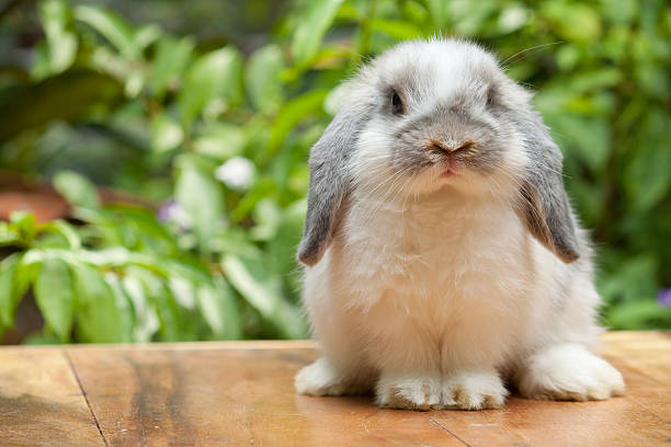 cute rabbit sitting on marble surface - rabbit stock photos and pictures