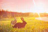 Cute grey rabbit outdoors in spring or summer