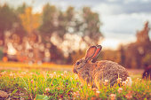 Cute rabbit outdoors in spring or summer