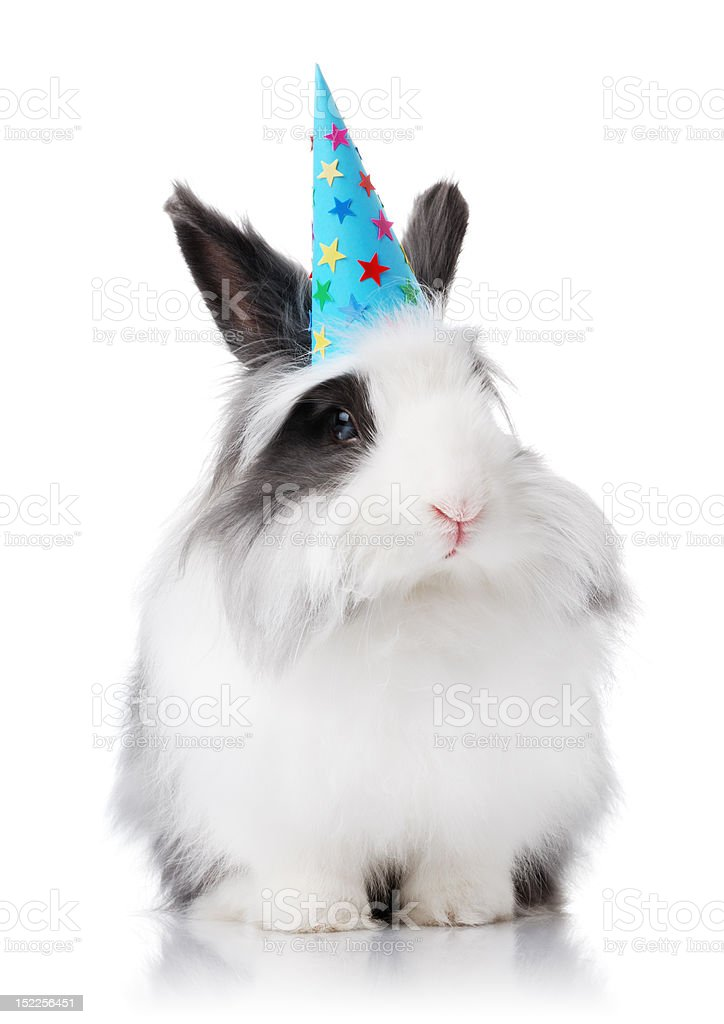 Cute rabbit with blue birthday hat on royalty-free stock photo