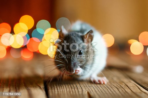 istock cute rat on wooden background beautiful bokeh 1192841950