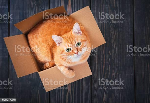 Cute red cat in a cardboard box picture id628077278?b=1&k=6&m=628077278&s=612x612&h=ycjrigld7wbzphzts7qu5m4owhlyk6lm5ae6xzkbsxk=