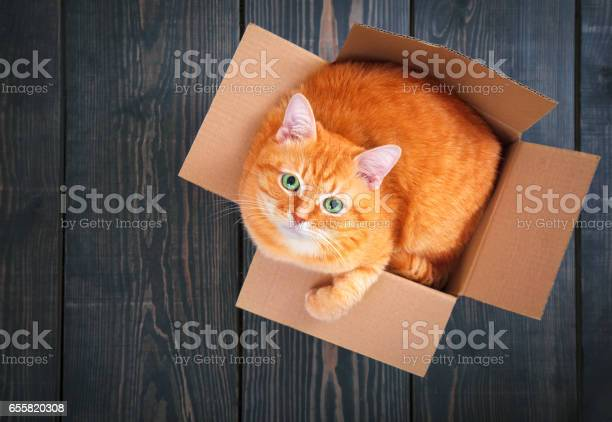 Cute red cat in a cardboard box picture id655820308?b=1&k=6&m=655820308&s=612x612&h=hq2rpp i8e8yiev1kuzl awckip dtcu 4xczu4qtly=