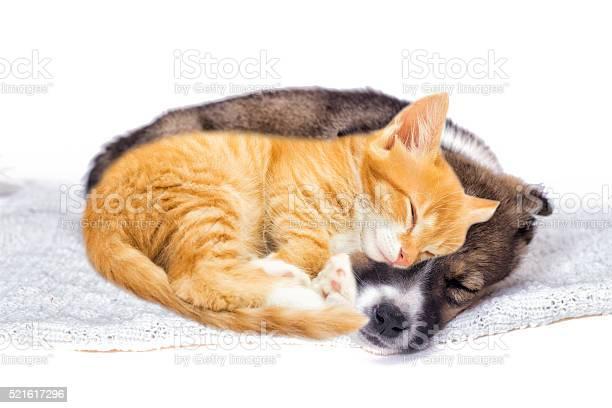Cute red kitten and puppy picture id521617296?b=1&k=6&m=521617296&s=612x612&h=iddubixxc7k34lhhhgufdz95yopdvtbmd523 9ix2ka=