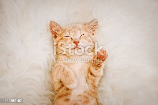 A cute, red kitten is sleeping on his back and smiling, paws up. The concept of sleep and good morning.