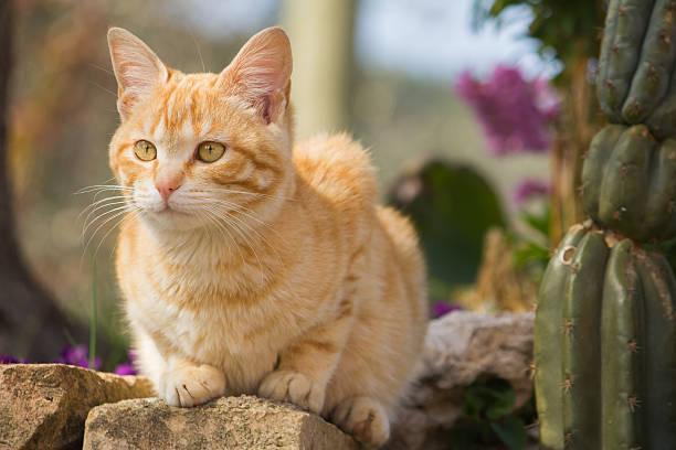 Cute red kitten picture id468491666?b=1&k=6&m=468491666&s=612x612&w=0&h=toz0bcijvzj3oxmh7vn0ewdad71jcaxvmcd2lc1rgw8=
