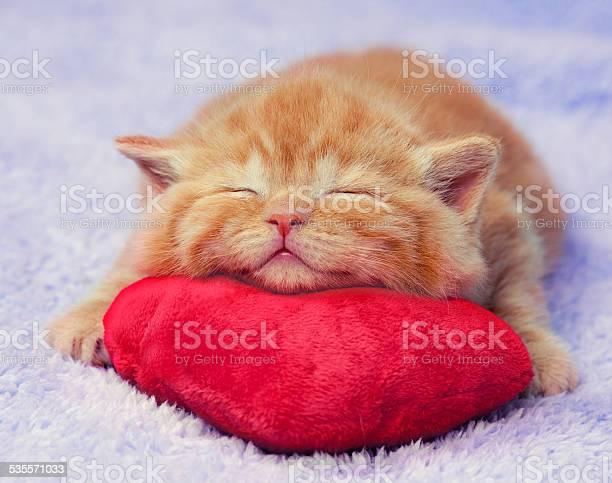 Cute red little kitten sleeping on the pillow picture id535571033?b=1&k=6&m=535571033&s=612x612&h=6md7ccfvolpxivjbgwgngdgvbbrw5qwwguut20bowwi=
