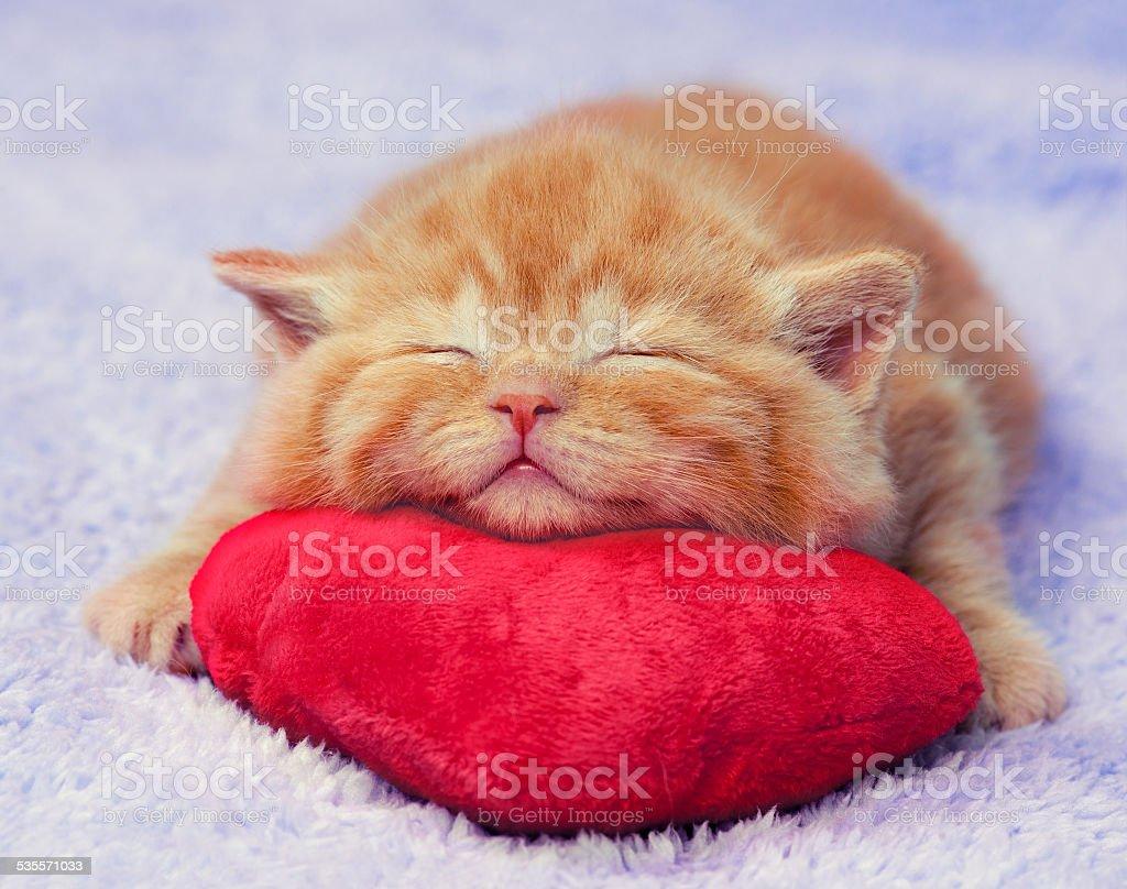 Niedliche kleine rote Kätzchen Schlafen auf der Matratze – Foto