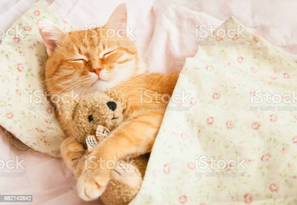 Cute red sleeping cat on a bed picture id682143842?b=1&k=6&m=682143842&s=612x612&h=q2 mvjxj6h8nwczhmoyv3kabnbvlr02mljkhxhzf3fu=