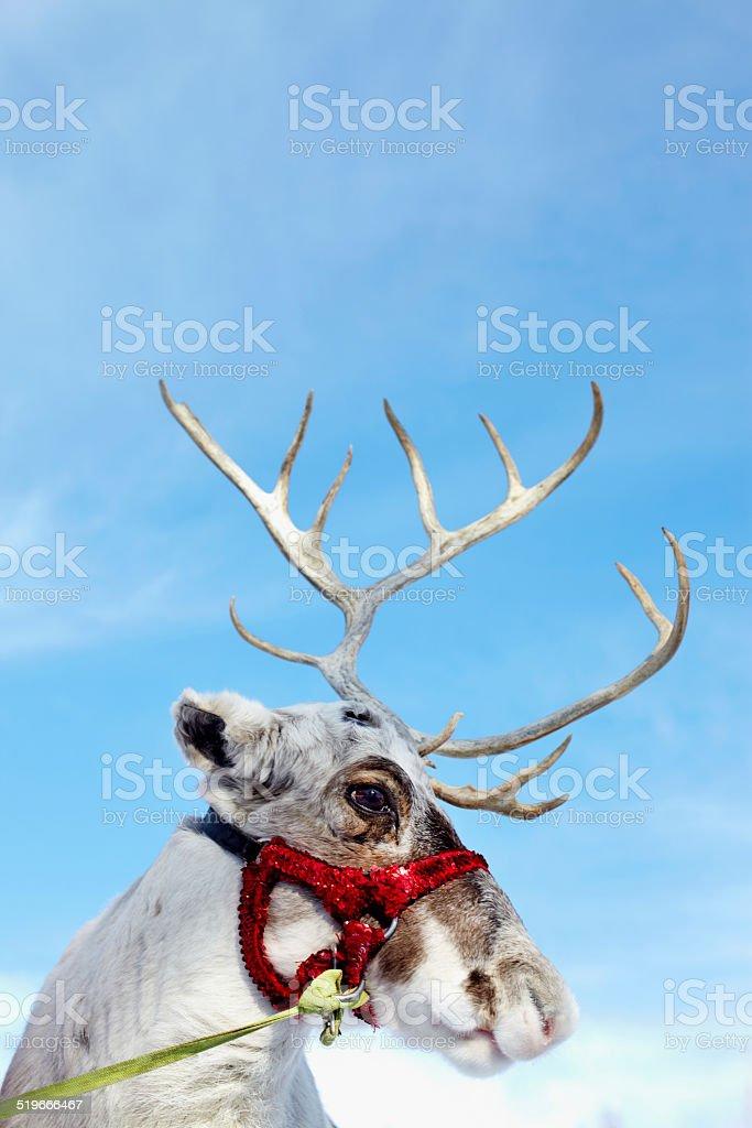 Cute reindeer stock photo