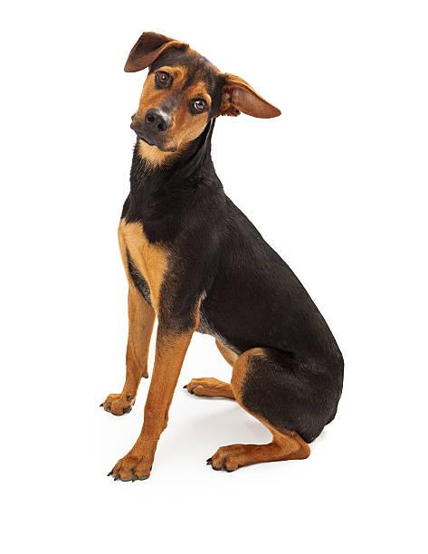süße such- und rettungshund mixed-breed - hunde aus dem tierheim stock-fotos und bilder