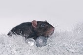 Cute rodent sit on a tinsel with christmas baubles. Isolated on gray background.
