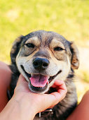 istock cute satisfied dog put his muzzle on man's lap and his stroking hands 1041987214