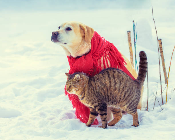 Cute scene funny dog and cat playing together outdoors in winter dog picture id1148035601?b=1&k=6&m=1148035601&s=612x612&w=0&h=ihfin7krptfl4sypzrlksfdkqdtvhabfc9zh 7svoia=
