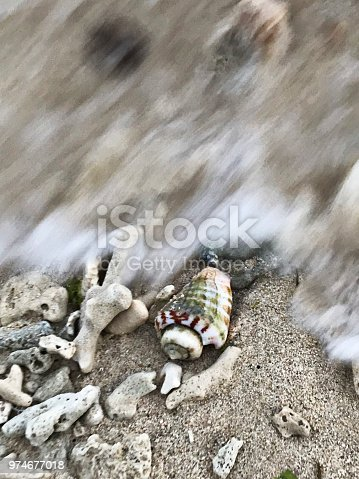 istock A cute seashell in the sea wave. 974677018