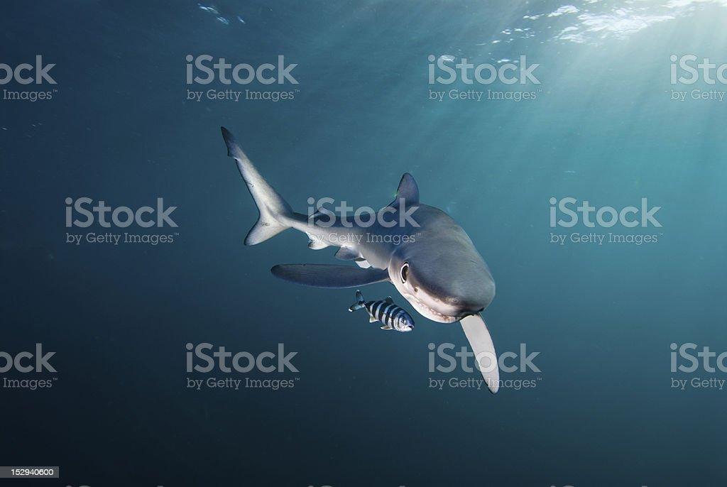 Cute shark and fish stock photo