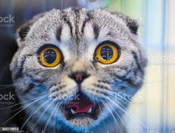 Cute shocked cat picture id640119614?b=1&k=6&m=640119614&s=612x612&h=odp qcgi1 7nyspycpyfcxjugktq4vho3zv7 dxl9os=