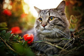 cat smelling green plant, with big whiskers. beautiful cat with funny emotions biting  stem on black background. space for text. yummy fresh vitamins for pet