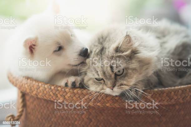 Cute siberian husky and persian cat lying picture id656913024?b=1&k=6&m=656913024&s=612x612&h=miosbviogfvmxmhl ase9osue3h0awuxa oyc6xkcbq=