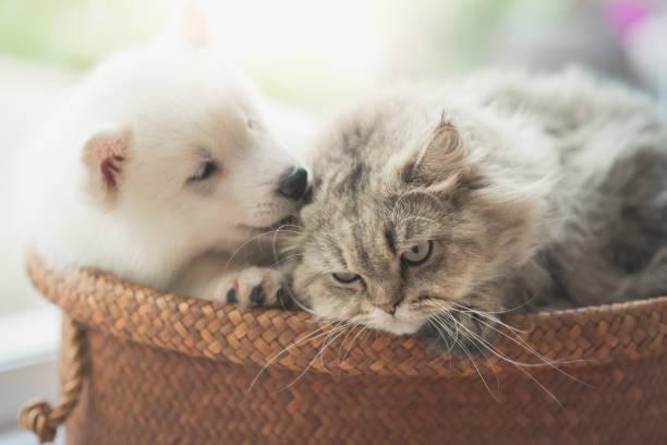 Cute siberian husky and persian cat lying picture id656913024?b=1&k=6&m=656913024&s=612x612&w=0&h=2ihnqdffniwotahxrs3aj ln d9rqkzxahaftgov638=