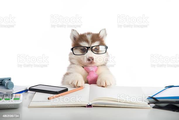 Cute siberian husky puppy in glasses working picture id480599734?b=1&k=6&m=480599734&s=612x612&h=fitqej5sgil4mpet1iz6caa40bk6xbjv3ov ohz3jfe=