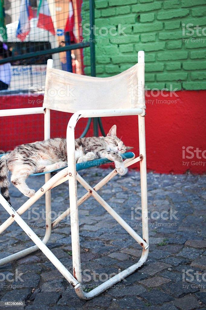 Gato fofo dormindo em uma cadeira branca Street foto royalty-free