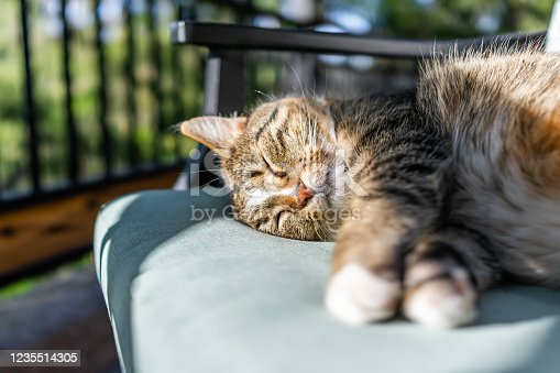 Cute sleepy sleeping calico tabby cat face lying curled up on chair on back in outside outdoors garden with green foliage in blurry blurred background