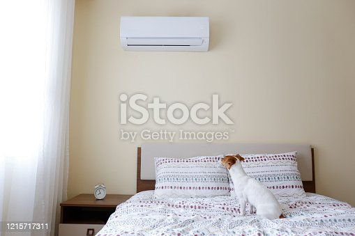 istock Cute small breed dog sitting on the bed with beige wall on background. 1215717311